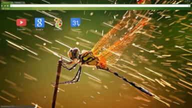 Dragonfly Chrome Theme