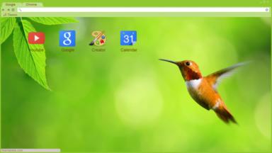 Hummingbird Nature Chrome Theme
