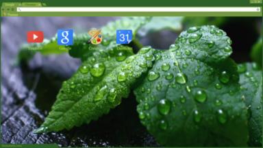 Raindrops On Leaves Chrome Theme