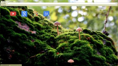 Moss And Mushrooms Chrome Theme