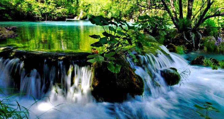 Jungle River Lake Chrome Theme